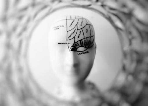 Tête de manequin avec zones du cerveau
