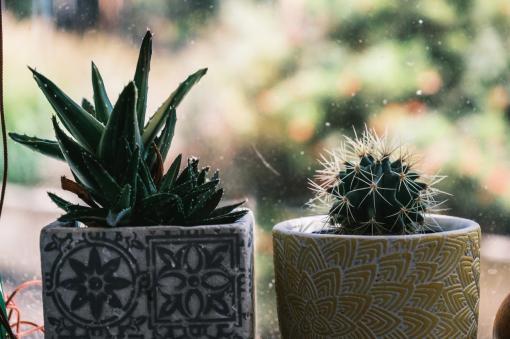 Mettre des plantes dans sa maison