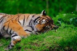 Titre qui dort allongé