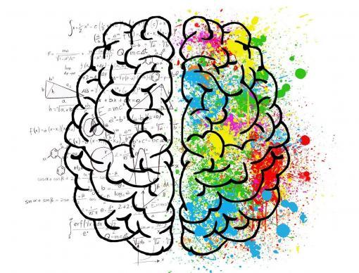 Plan artistique du cerveau